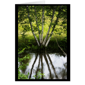 Birch Trees Note Card
