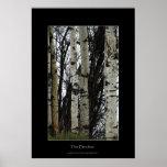 Birch Trees Wilderness Forest Photo Print