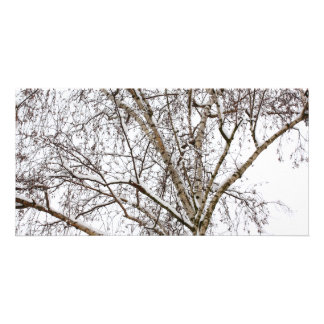 birch with snow custom photo card