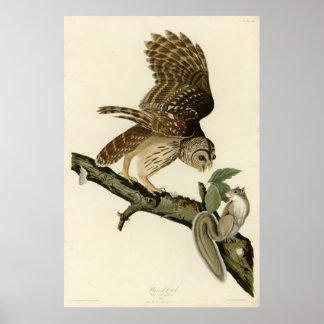 Bird, America, Barred Owl, Audubon, Vintage Poster