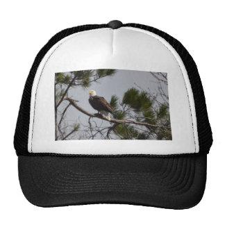 Bird American Bald Eagle Nature Cap
