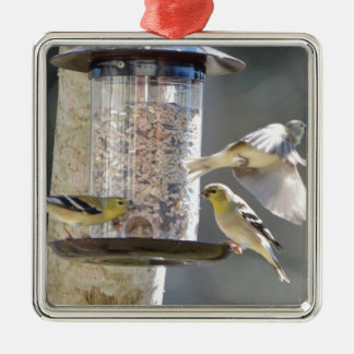 Bird American Goldfinch Nature Christmas Ornament