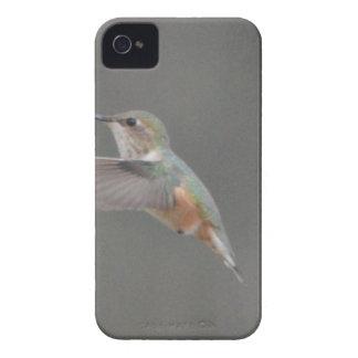 Bird American Rufous Hummingbird Nature iPhone 4 Cases