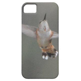 Bird American Rufous Hummingbird Nature iPhone 5 Cases