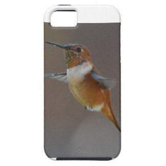 Bird American Rufus Hummingbird Nature iPhone 5 Cover