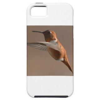 Bird American Rufus Hummingbird Nature iPhone 5 Covers