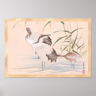 Bird and Flower Album, Wading Cranes vintage art Poster
