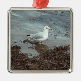 Bird at Water Edge. Black Headed Gull. Ornament
