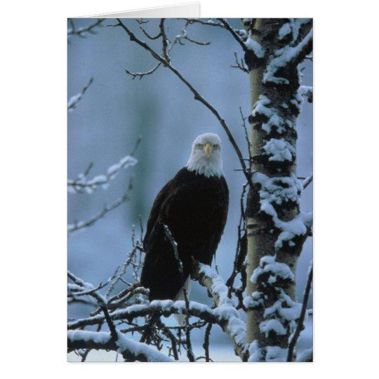 Bird / Bald Eagle in winter snow Card