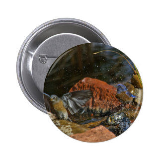 bird bath pinback button