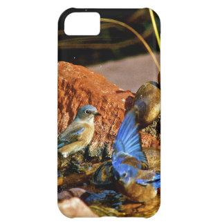 bird bath iPhone 5C cases