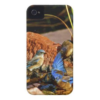 bird bath iPhone 4 cover
