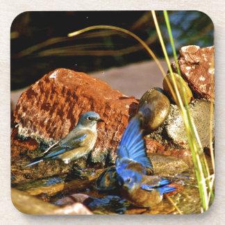bird bath beverage coaster