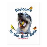 Bird Bath Dog