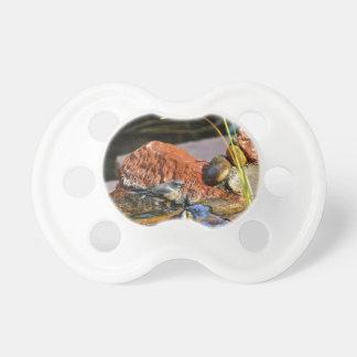 bird bath pacifiers