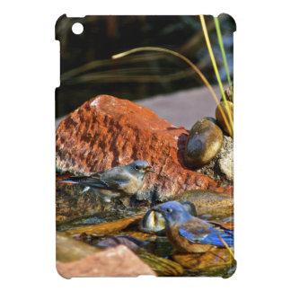 bird bath cover for the iPad mini
