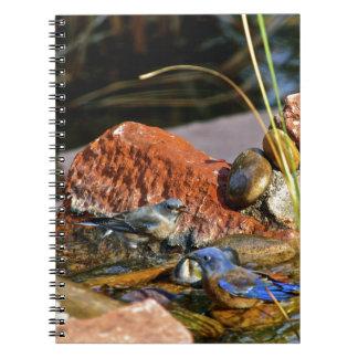 bird bath spiral notebook
