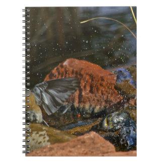 bird bath spiral note books