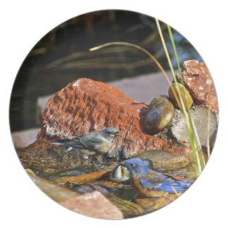 bird bath party plates