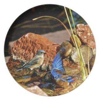 bird bath plate