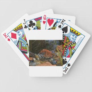 bird bath playing cards