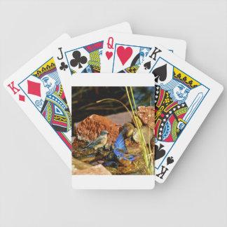 bird bath poker cards