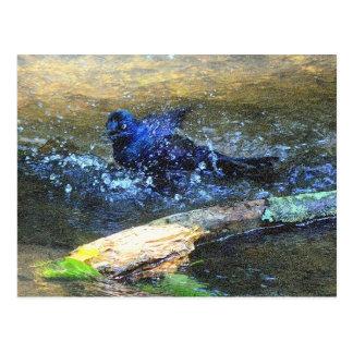 Bird Bath Postcard