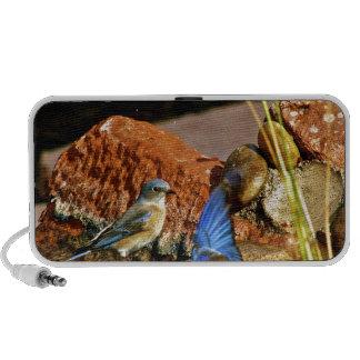 bird bath travel speaker