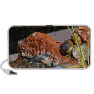 bird bath portable speaker