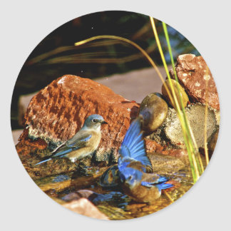bird bath round sticker