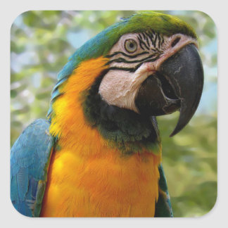 Bird: Blue and Gold Parrot sticker