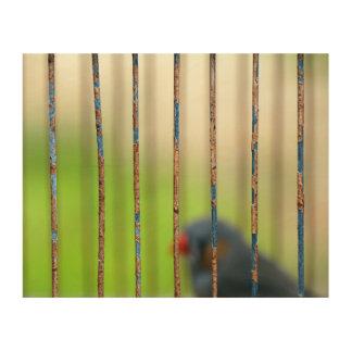 Bird, Cage, bars Wood Prints