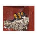 Bird Choir Postcards
