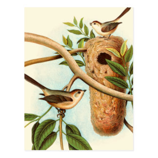 Bird Couple on a Nest Perched on a Branch Postcard