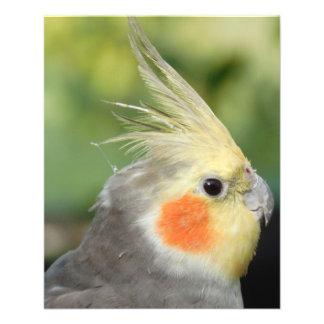 Bird 11.5 Cm X 14 Cm Flyer