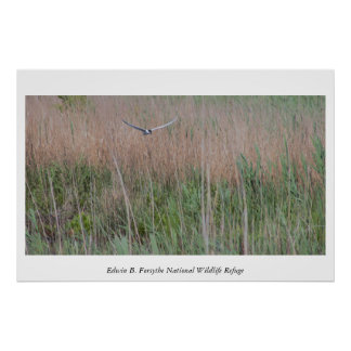 Bird Flying Over The Refuge Poster