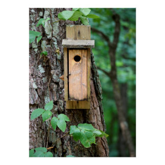 Bird House nesting box Poster