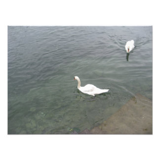 Bird in a lake photo print