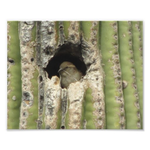 Bird in a Saguaro Nest Art Photo