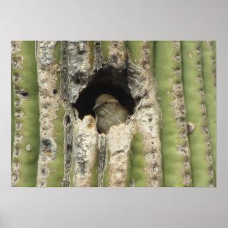 Bird in a Saguaro Nest Poster