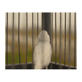 Bird in Cage Wood Canvas