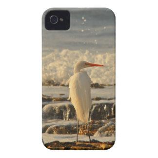 Bird in Paradise Case-Mate iPhone 4 Cases