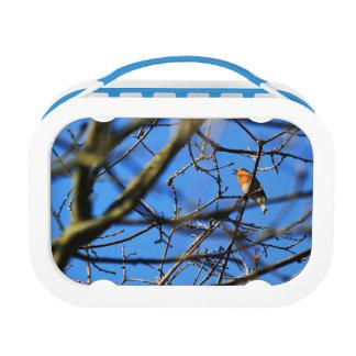Bird Lunch Box