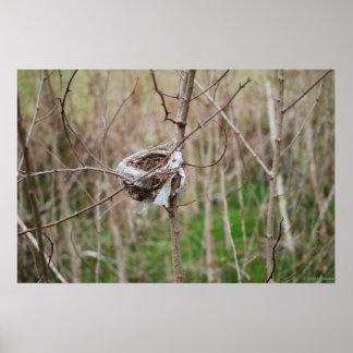 Bird Nest poster