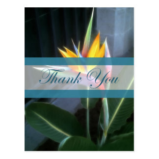 Bird of Paradise 10 Thank You Post Cards