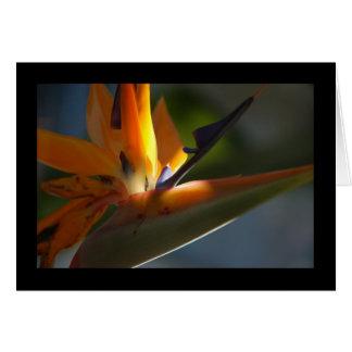 Bird-of-Paradise 3 Card