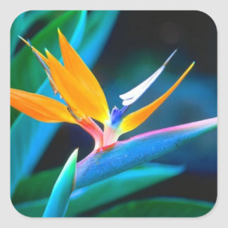 Bird of Paradise Decrative Sticker