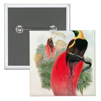 Bird of Paradise, engraved by T. Walter 15 Cm Square Badge