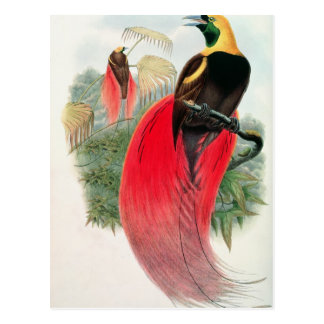 Bird of Paradise, engraved by T. Walter Postcard