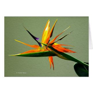Bird of Paradise Flower Card